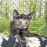 Adopt A Pet :: Cappucine - Dover, OH