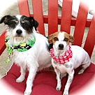 Adopt A Pet :: Cute Thelma & Louise-VIDEO