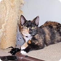 Adopt A Pet :: Trixie - Temecula, CA