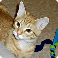 Adopt A Pet :: Tangy - Chesapeake, VA