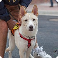 Adopt A Pet :: Deacon **Courtesy Listing** - Roswell, GA