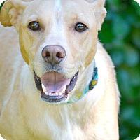 Adopt A Pet :: WILLOW - Nashville, TN