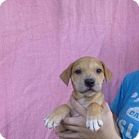 Adopt A Pet :: Ripley - Oviedo, FL