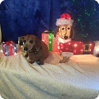 Adopt A Pet :: Tessie - Marcellus, MI