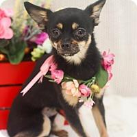 Adopt A Pet :: Mia - Loomis, CA