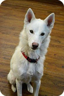Husky Mix Dog for adoption in Lake Odessa, Michigan - Sky