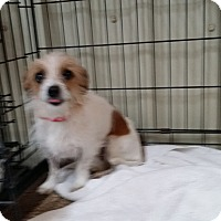 Adopt A Pet :: THELMA - Lubbock, TX