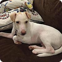 Adopt A Pet :: Thurston - Enfield, CT