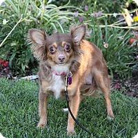 Adopt A Pet :: NORAH - Newport Beach, CA