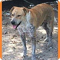 Adopt A Pet :: Teddy Ruxpin - Whitestone, NY