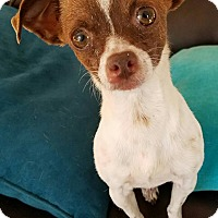 Adopt A Pet :: Lydia - San Diego, CA