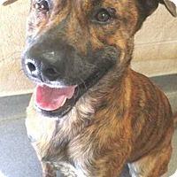 Adopt A Pet :: Titan - Hardeeville, SC