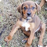 Adopt A Pet :: Limbo - Duluth, GA