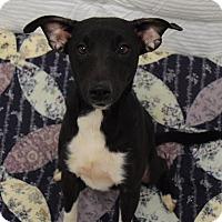 Adopt A Pet :: Jason - Lisbon, OH