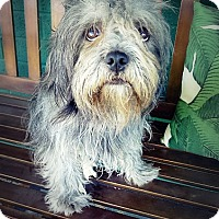 Adopt A Pet :: Fringe - Casa Grande, AZ