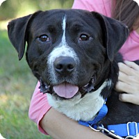 Adopt A Pet :: Mikey - Harrison, NY