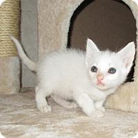 Adopt A Pet :: Vanilla - San Bernardino, CA