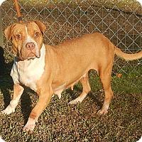 Adopt A Pet :: Emma - Newport, NC