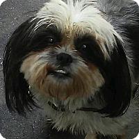 Adopt A Pet :: Nico - Thousand Oaks, CA
