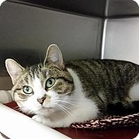 Adopt A Pet :: Mystina - Chippewa Falls, WI