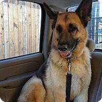 Adopt A Pet :: Sassy - San Angelo, TX
