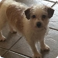 Adopt A Pet :: Merri 3244 - Toronto, ON