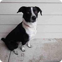 Adopt A Pet :: GRIZZLY - McKinleyville, CA