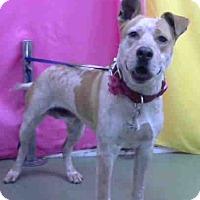 Adopt A Pet :: URGENT on 3/1 @DEVORE - San Bernardino, CA