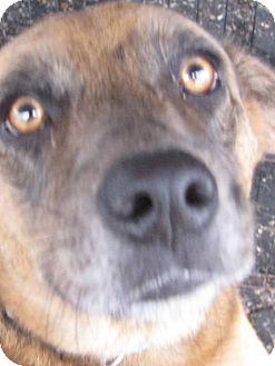 Adopt A Dog Crowley La