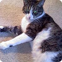 Adopt A Pet :: Leo - Laguna Woods, CA