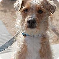 Adopt A Pet :: Wendell - Phoenix, AZ