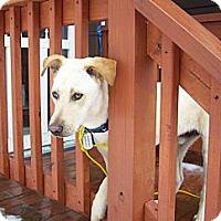 Adopt A Pet :: Seaver - Worcester, MA