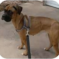 Adopt A Pet :: Annabelle-Only $85 adoption! - Litchfield Park, AZ