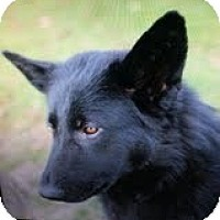 Adopt A Pet :: Jett - Staunton, VA