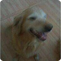 Adopt A Pet :: Sadie - Denver, CO