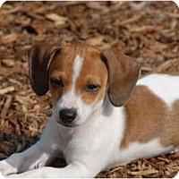 Adopt A Pet :: Lucas - Ft. Myers, FL