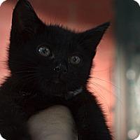Adopt A Pet :: Dexter - Brooklyn, NY
