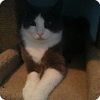 Adopt A Pet :: Tommy - Salem, OR