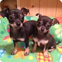 Adopt A Pet :: Bam Bam and Dino - Homewood, AL