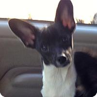 Adopt A Pet :: Raffi & Sachi! - Sacramento, CA