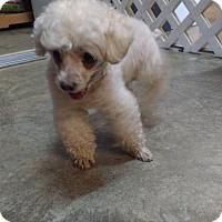 Dog Rescue Bowmanville