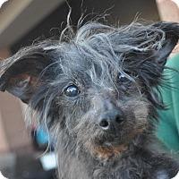 Adopt A Pet :: Jammi - Atlanta, GA
