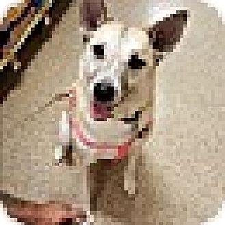 German Shepherd Dog Mix Dog for adoption in Fayetteville, Georgia - Zuri