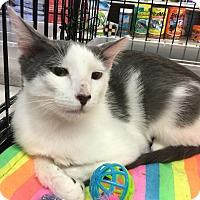 Adopt A Pet :: Terrence - Gilbert, AZ