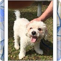 Adopt A Pet :: Adopted!! Ziggy - FL - Tulsa, OK