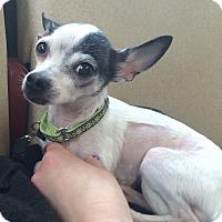 Adopt A Pet :: Willamena - Oak Ridge, NJ