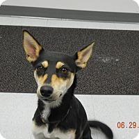Adopt A Pet :: CLAIRE - Sandusky, OH