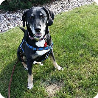 Hound (Unknown Type) Mix Dog for adoption in Edmonton, Alberta - Colby Cheese