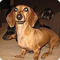 Adopt A Pet :: Deborah - Forest Ranch, CA