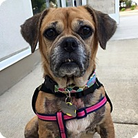 Adopt A Pet :: Harmony - Palatine, IL